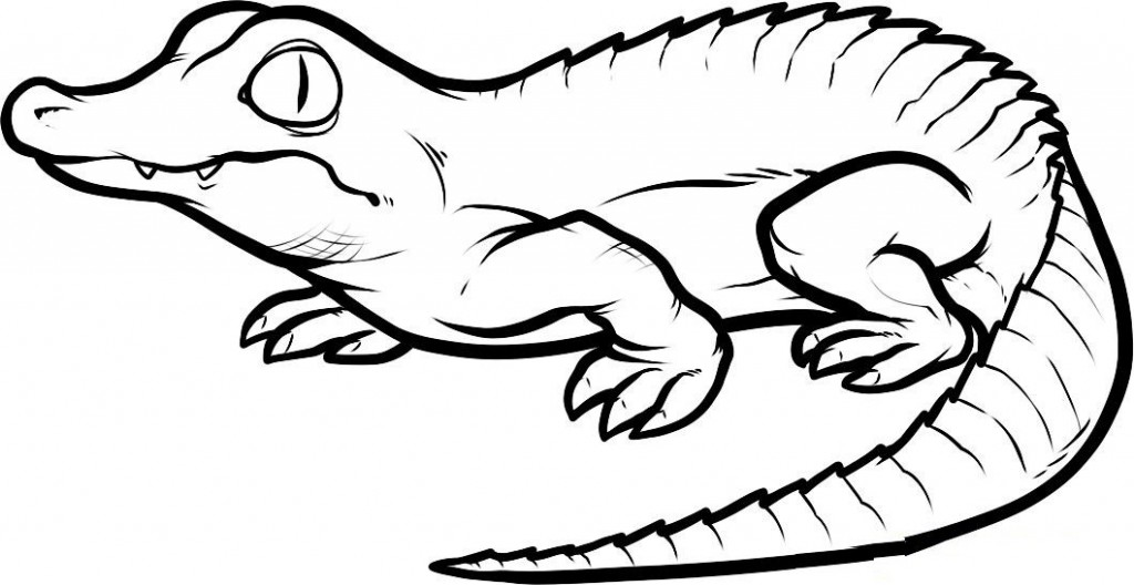 cartoon alligator coloring pages cartoon alligator images clipartsco pages cartoon coloring alligator