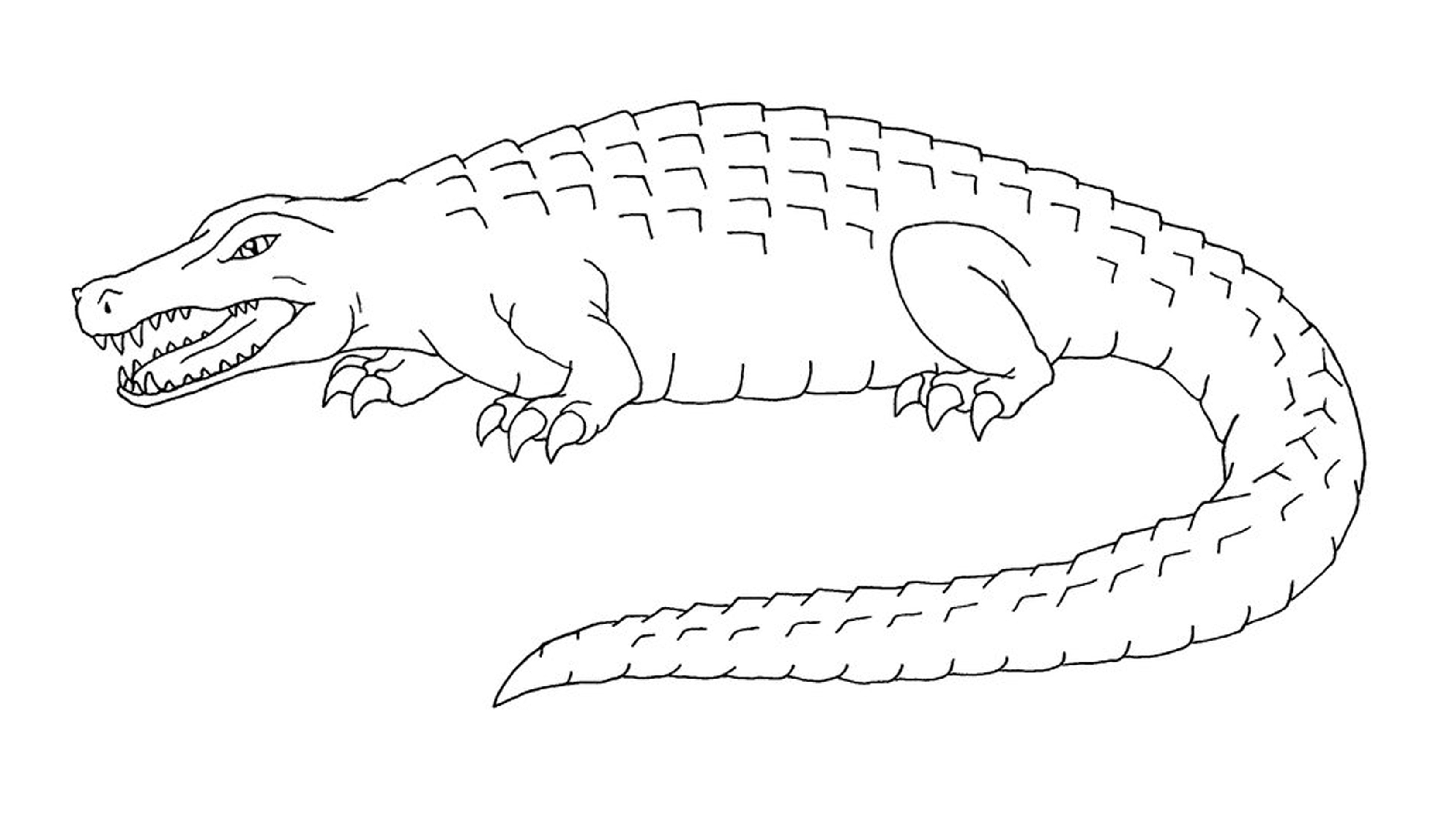 cartoon alligator coloring pages free printable alligator coloring pages for kids alligator coloring cartoon pages