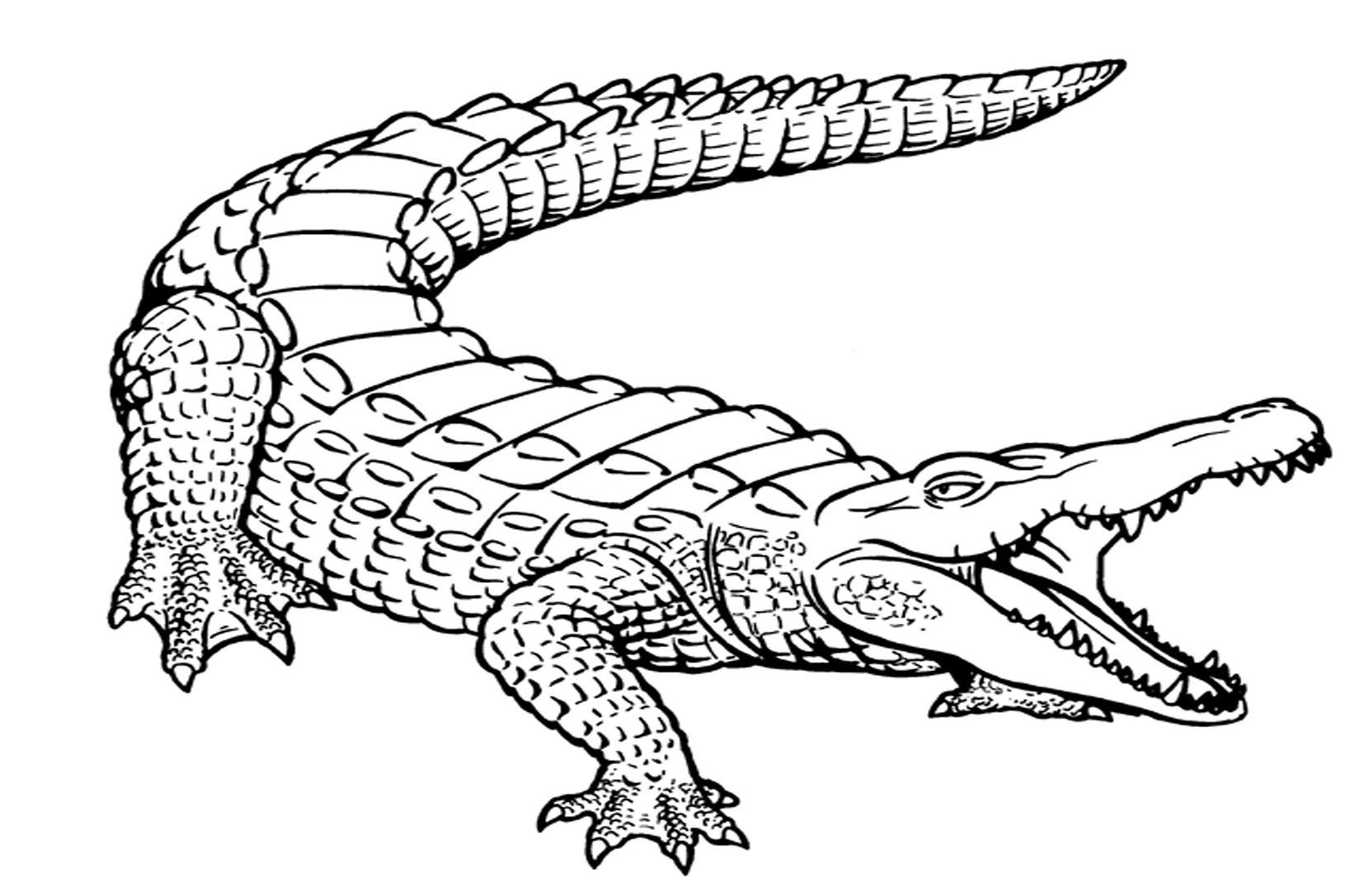 cartoon alligator coloring pages free printable alligator coloring pages for kids pages coloring alligator cartoon