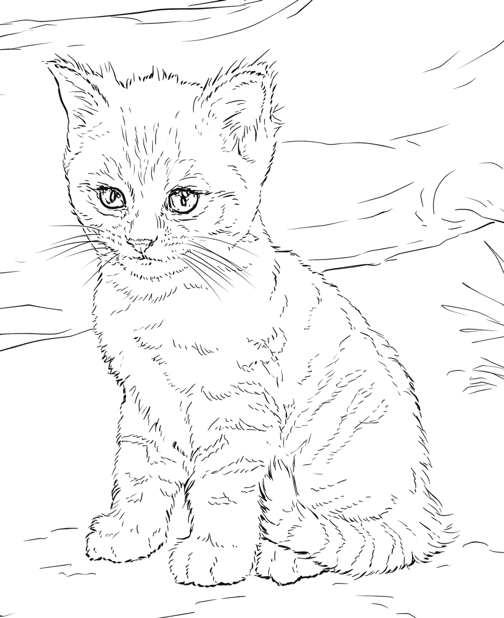 cat coloring picture cat free to color for kids wise cat full of details picture coloring cat