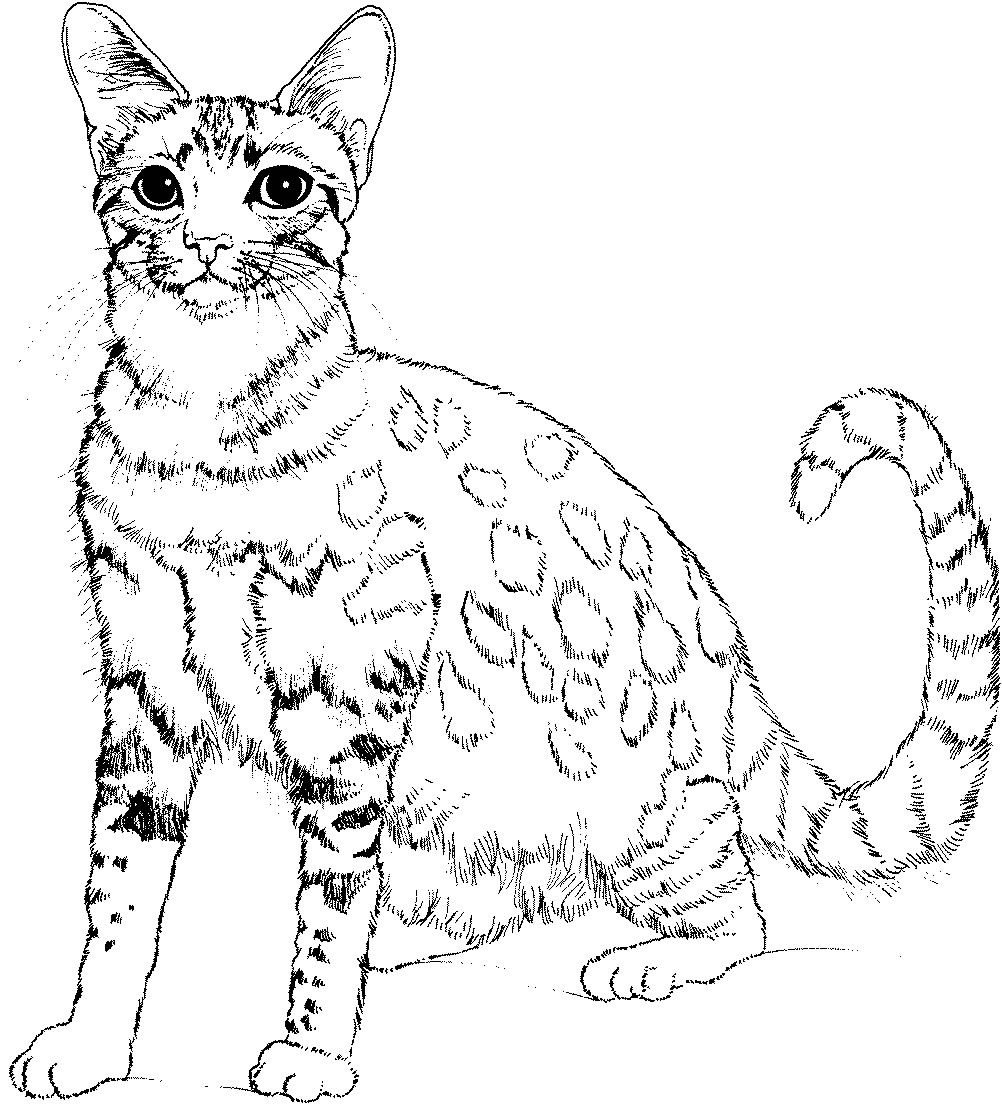 cat pictures to color and print kitten coloring pages best coloring pages for kids pictures cat print and to color