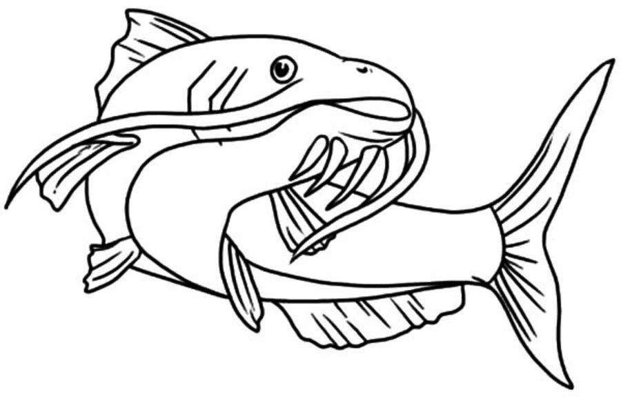 catfish coloring page catfish 18 coloring page supercoloringcom sketch coloring page page coloring catfish