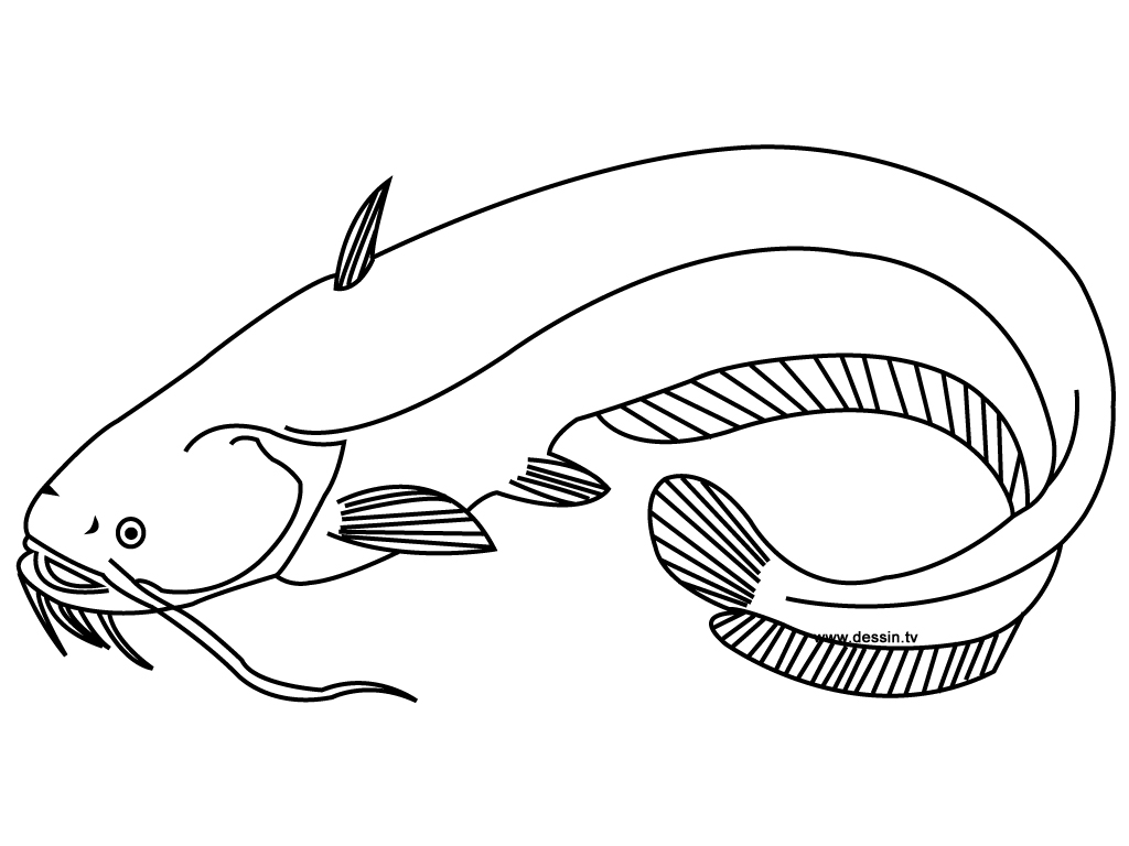 catfish coloring page catfish 8 coloring page free printable coloring pages page coloring catfish