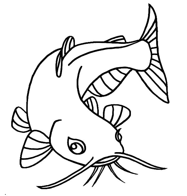 catfish coloring page catfish clipart coloring page catfish coloring page page catfish coloring