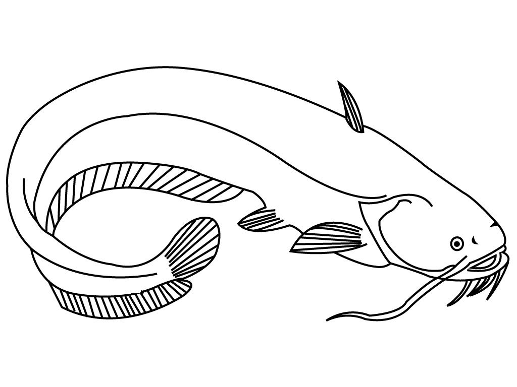catfish coloring page catfish clipart coloring page catfish coloring page page catfish coloring 1 1