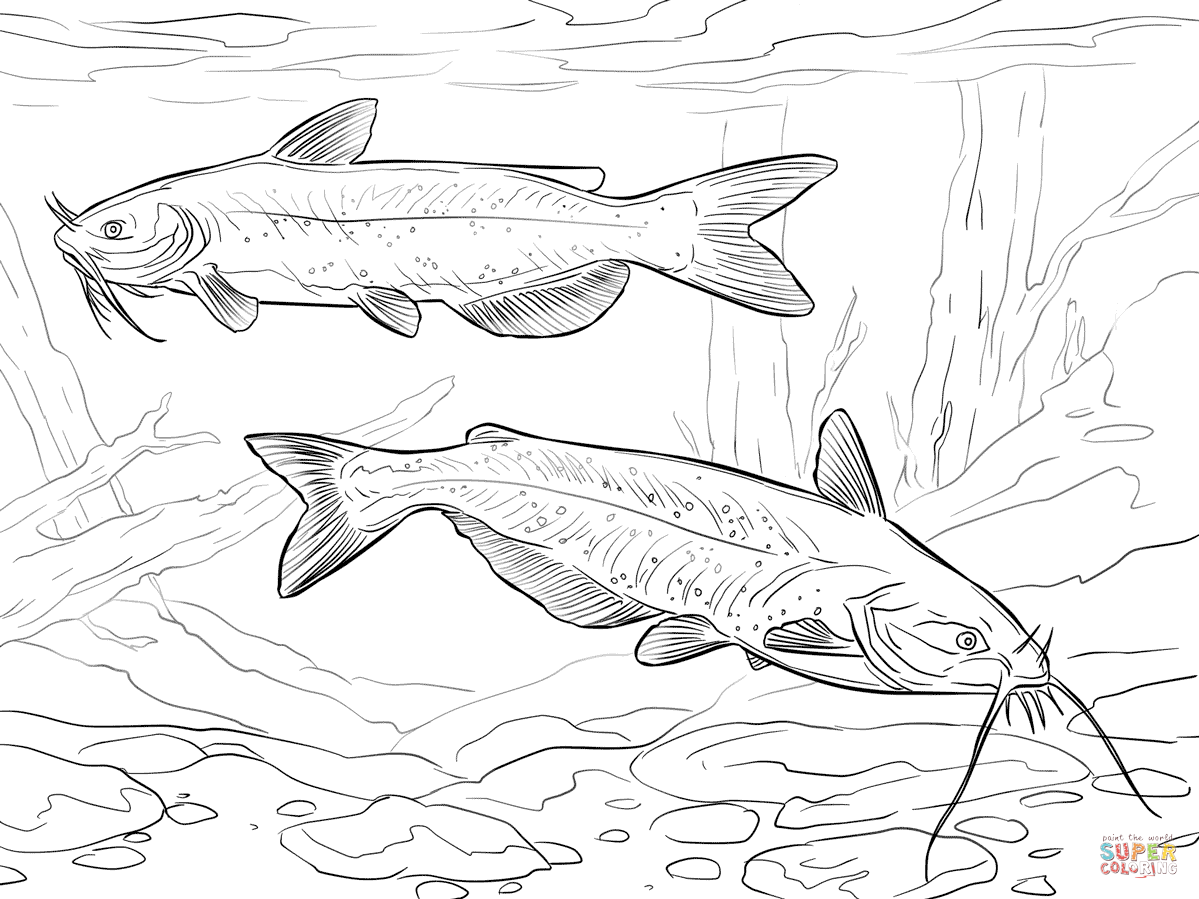 catfish coloring page catfish coloring pages download and print catfish page coloring catfish