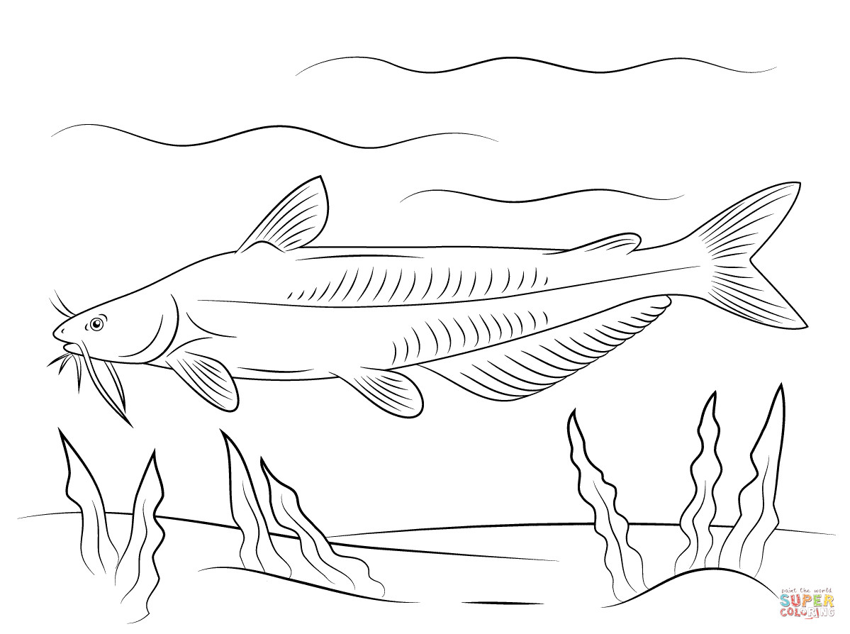 catfish coloring page catfish drawing images at getdrawings free download coloring page catfish