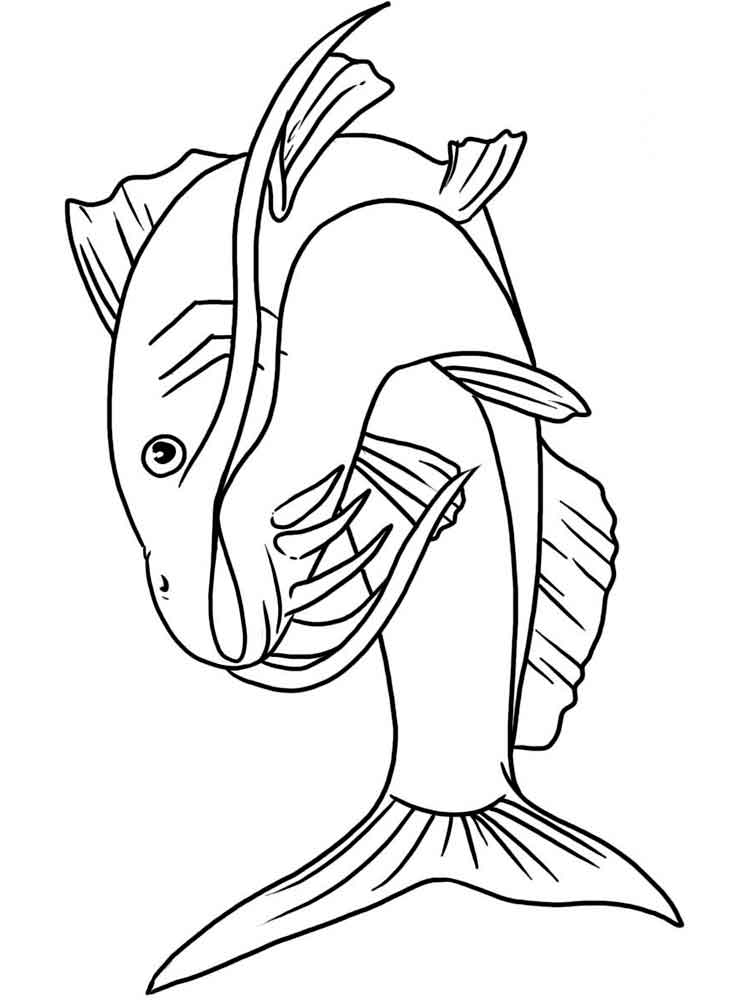 catfish coloring page catfish with beuatiful eyes coloring pages best place to coloring catfish page