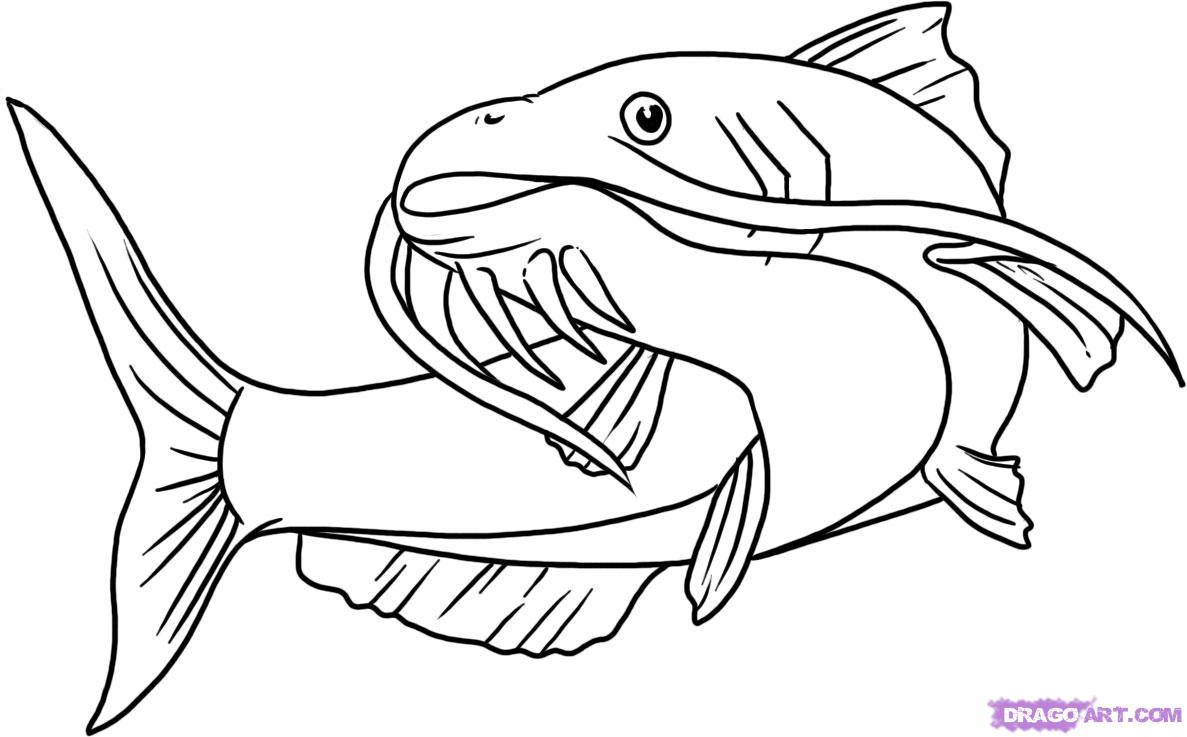 catfish coloring page coloring catfish page catfish coloring