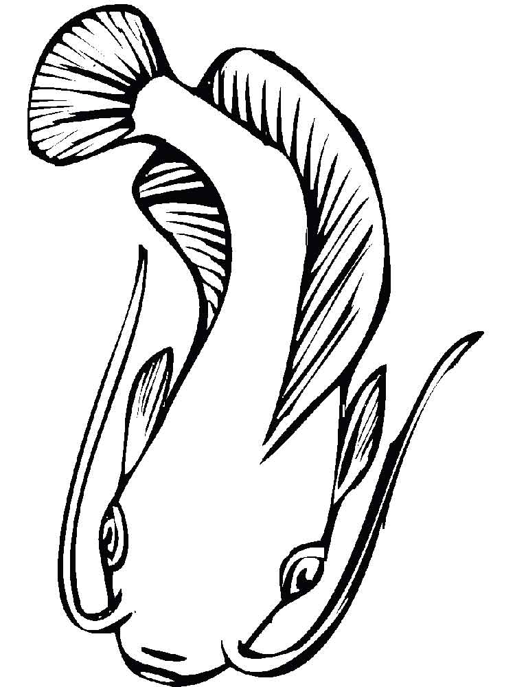 catfish coloring page flathead catfish coloring page coloring pages catfish coloring page