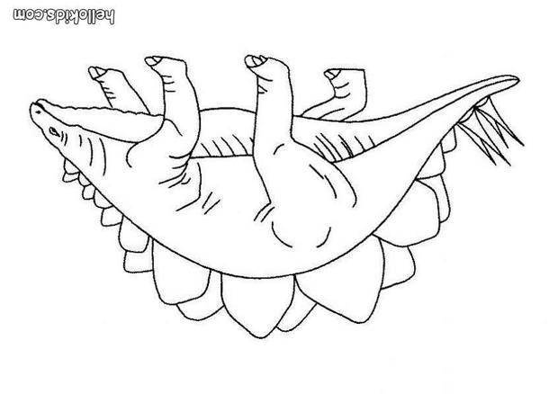 ceratosaurus coloring pages ceratosaurus coloring pages at getdrawings free download ceratosaurus pages coloring