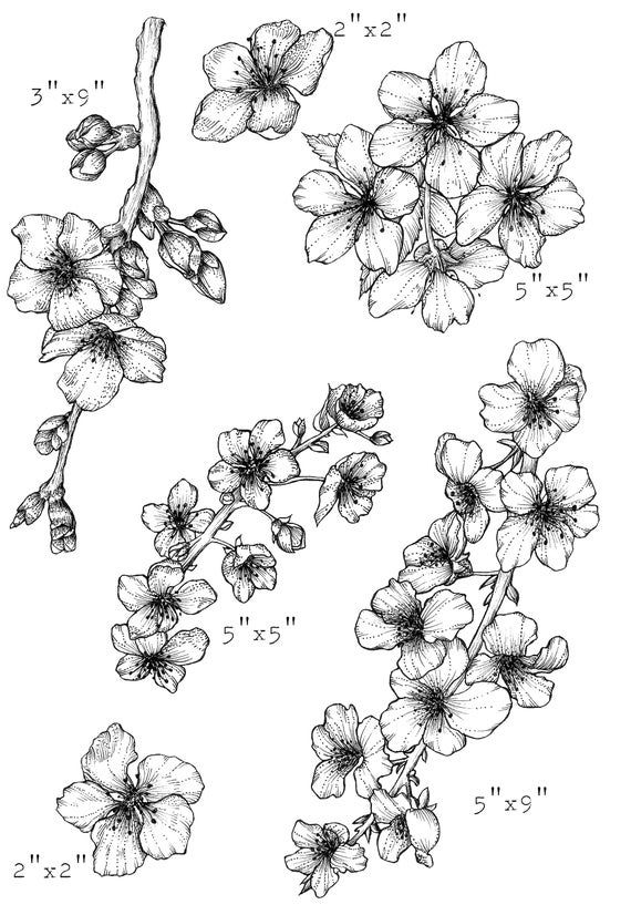 cherry blossom tree drawing cherry blossom drawing outline at getdrawings free download drawing tree blossom cherry