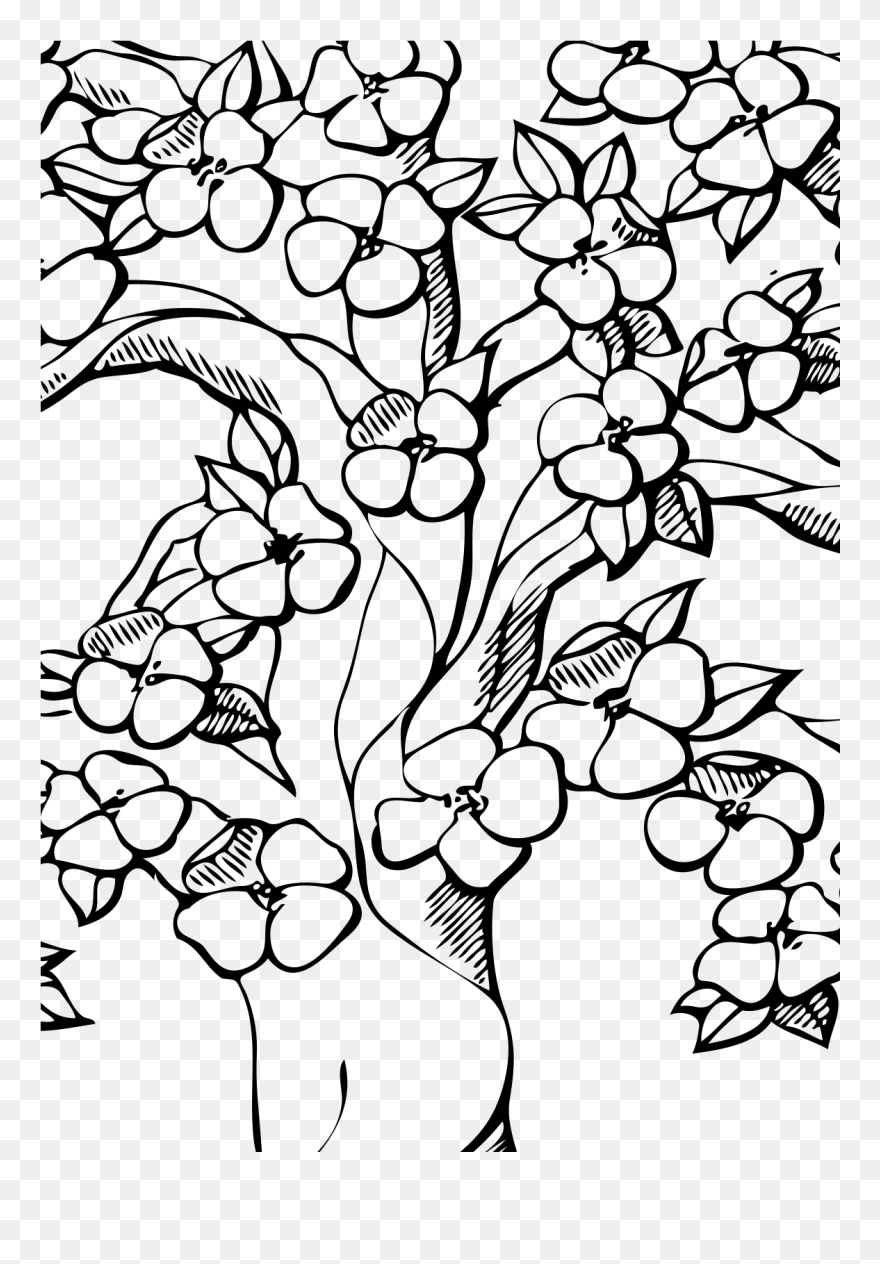 cherry blossom tree drawing cherry blossom flower drawing at getdrawings free download tree cherry drawing blossom