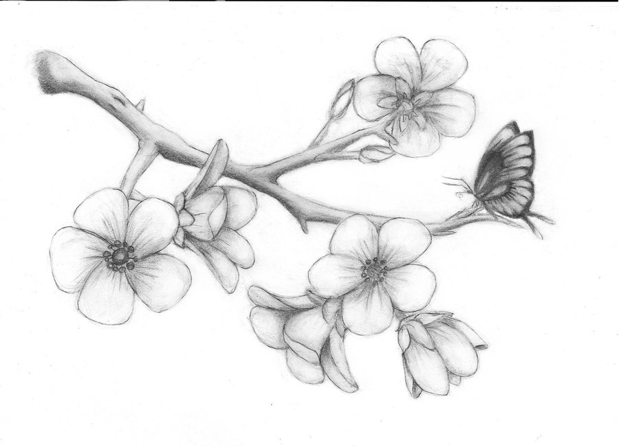 cherry blossom tree drawing cherry blossom pencil drawing at getdrawings free download tree drawing blossom cherry