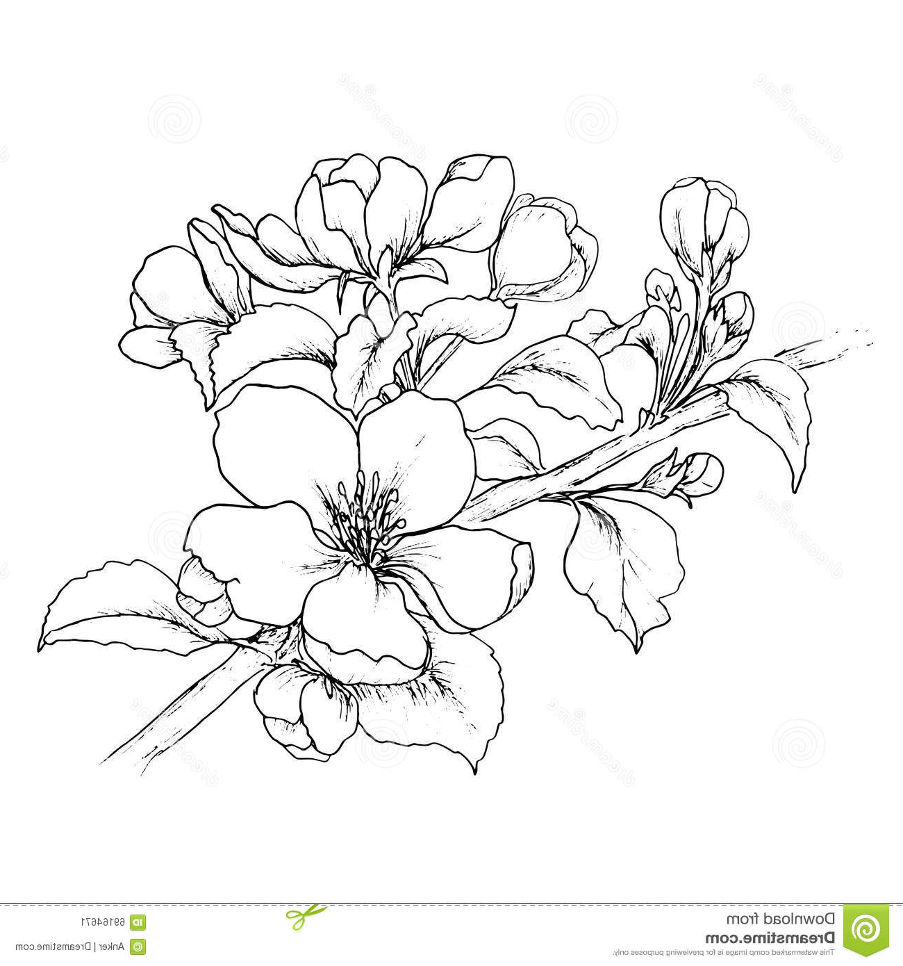 cherry blossom tree drawing cherry blossom tree drawing black and white transparent cherry tree drawing blossom