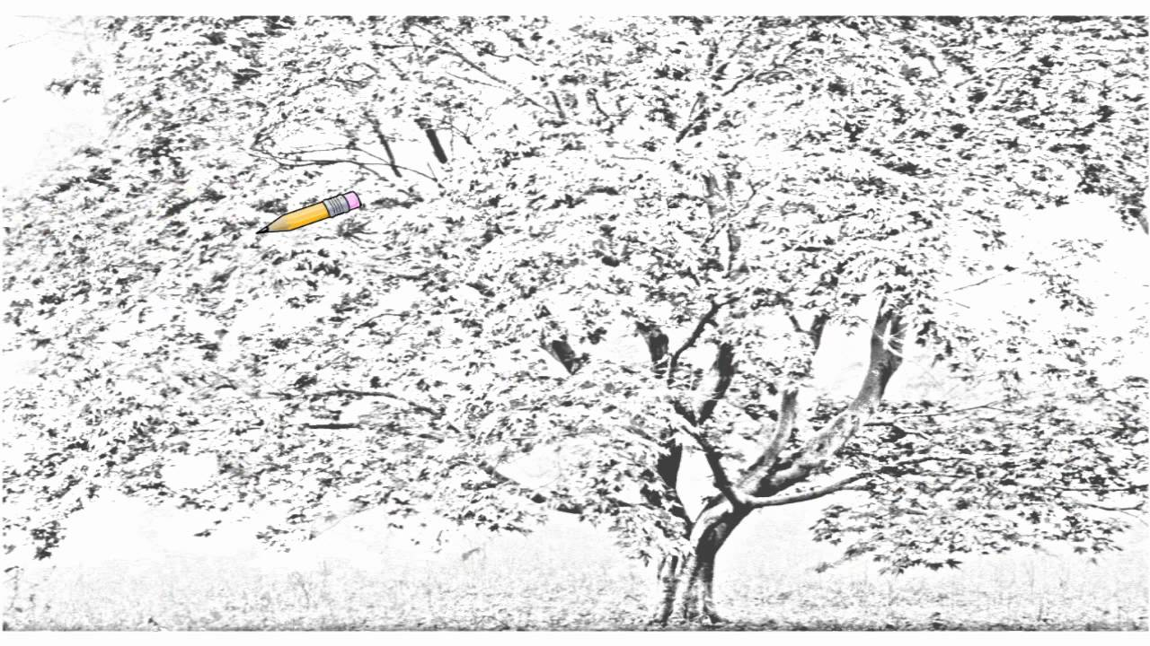 cherry blossom tree drawing simple cherry blossom drawing at getdrawings free download blossom cherry drawing tree