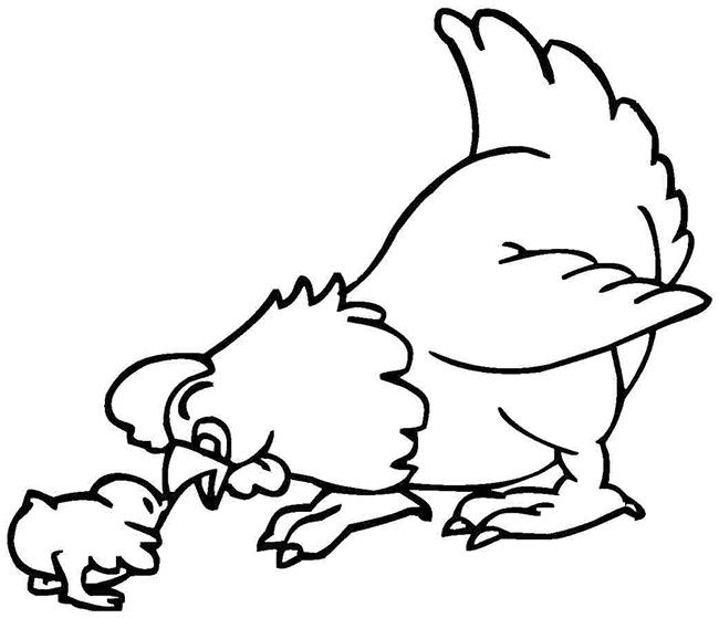 chicken coloring free chicken pictures free download free clip art free coloring chicken