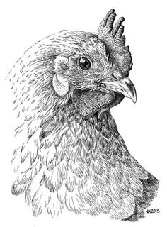 chicken drawings 3772 best chickens art and other poultry images chicken drawings chicken