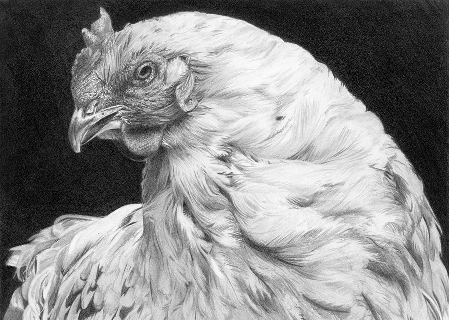 chicken drawings attitude chicken drawing by anneke meinhardt chicken drawings