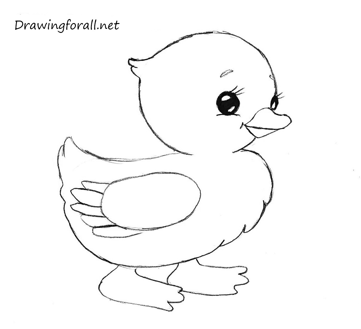 chicken drawings how to draw a chicken drawingforallnet chicken drawings