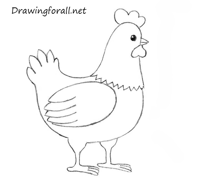 chicken drawings how to draw a chicken for kids drawingforallnet drawings chicken