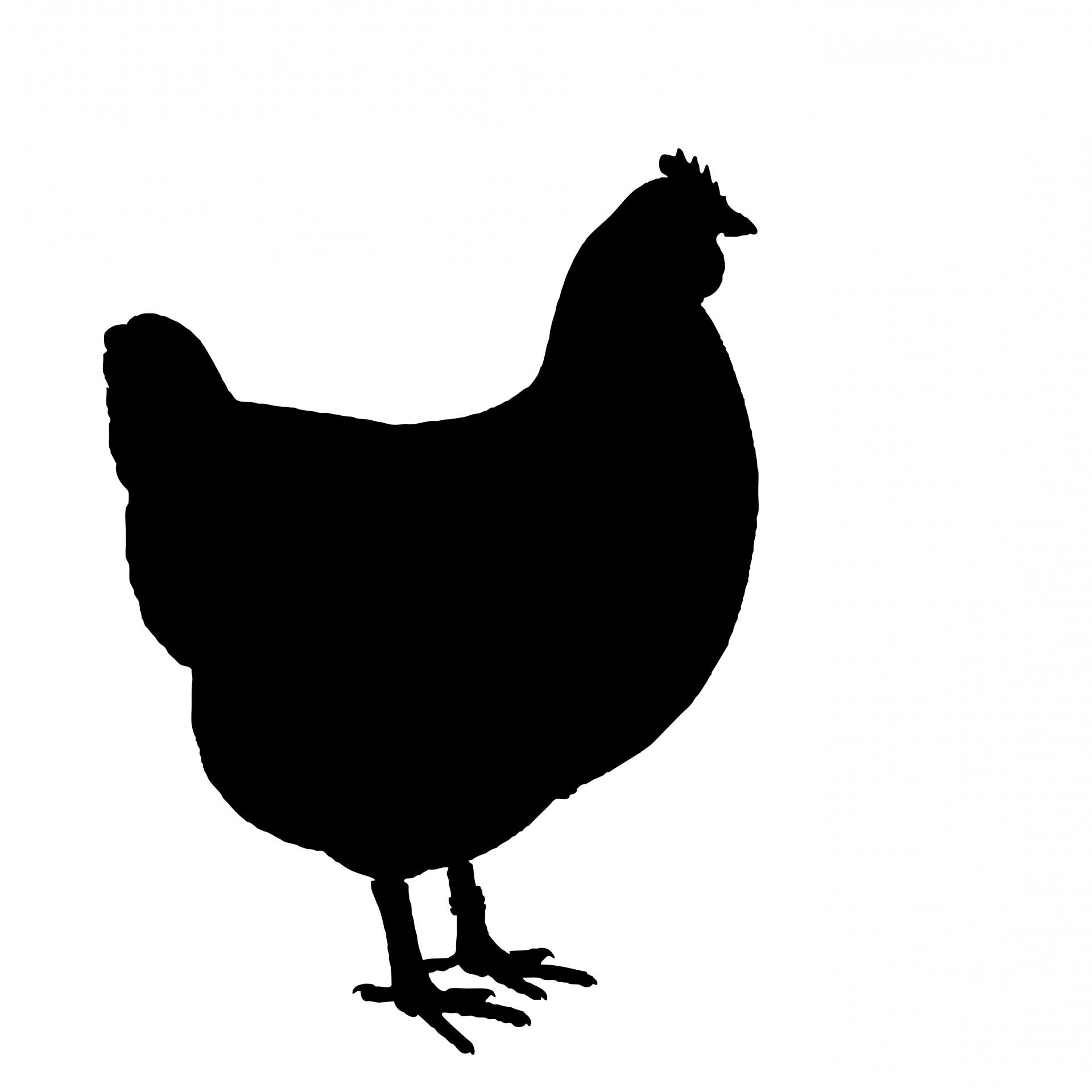 chicken silhouette chicken silhouette clip art at getdrawings free download chicken silhouette