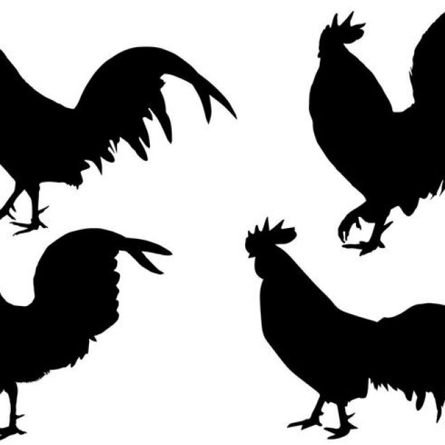 chicken silhouette chicken silhouette outline at getdrawings free download chicken silhouette
