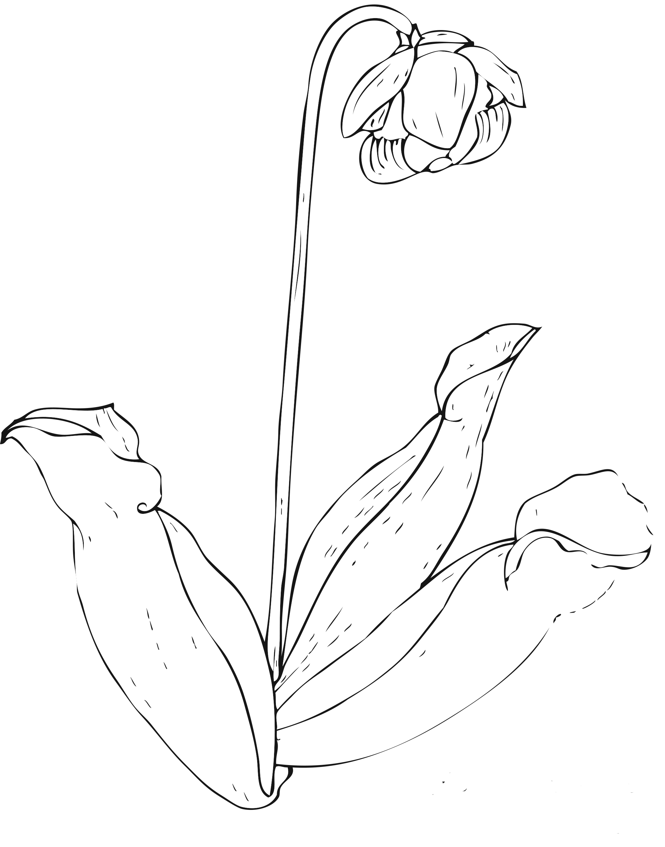 childrens coloring pages flowers free printable flower coloring pages for kids best coloring flowers pages childrens