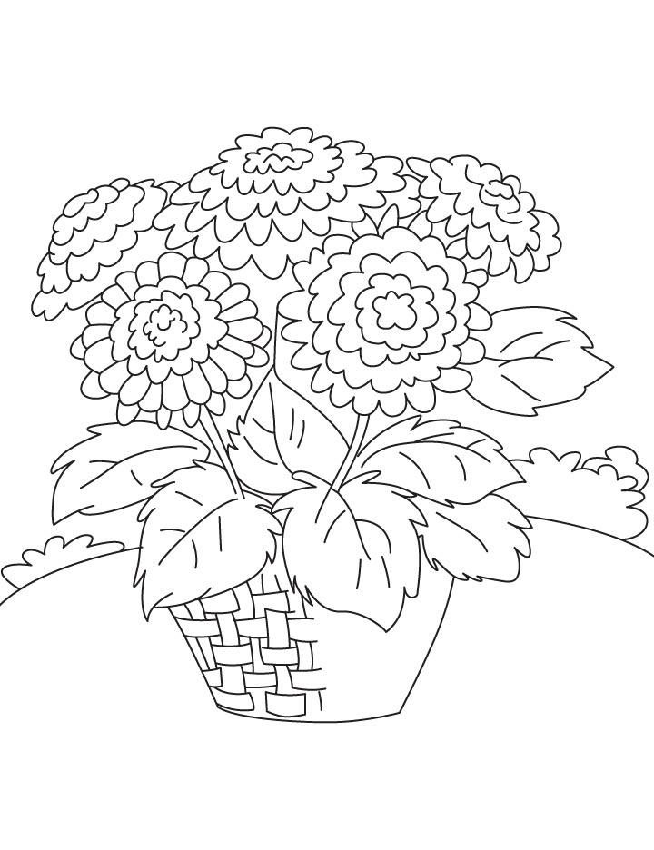 chrysanthemum coloring pages chrysanthemum coloring pages to download and print for free coloring chrysanthemum pages