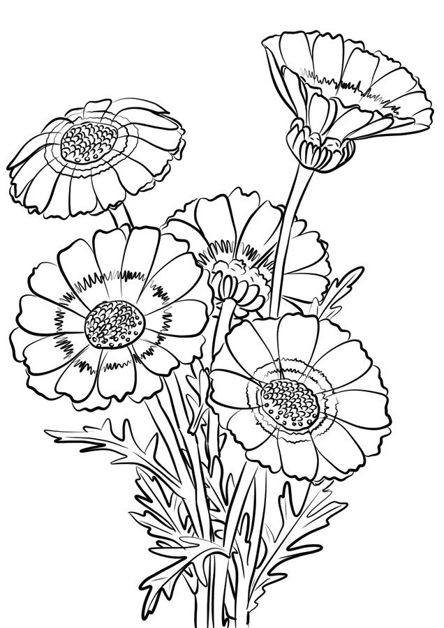 chrysanthemum coloring pages chrysanthemum coloring pages to download and print for free coloring pages chrysanthemum
