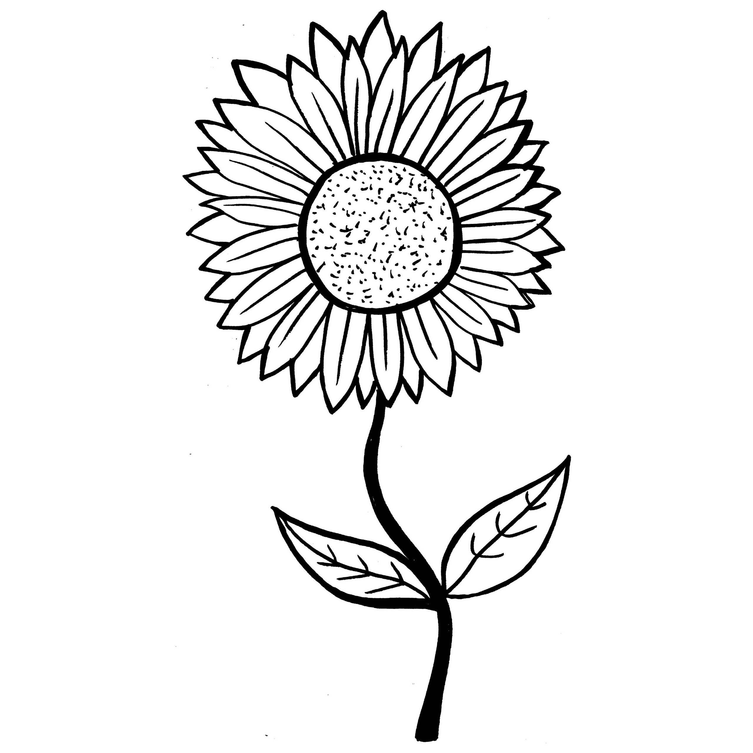 chrysanthemum coloring pages chrysanthemum drawing free download on clipartmag pages chrysanthemum coloring