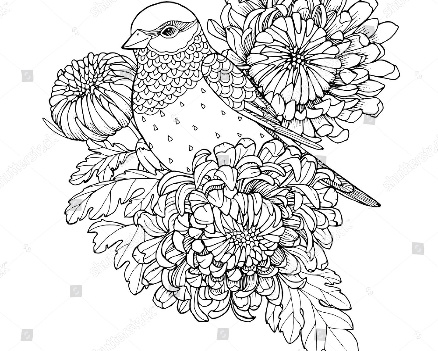 chrysanthemum coloring pages chrysanthemum flower drawing at getdrawings free download coloring chrysanthemum pages