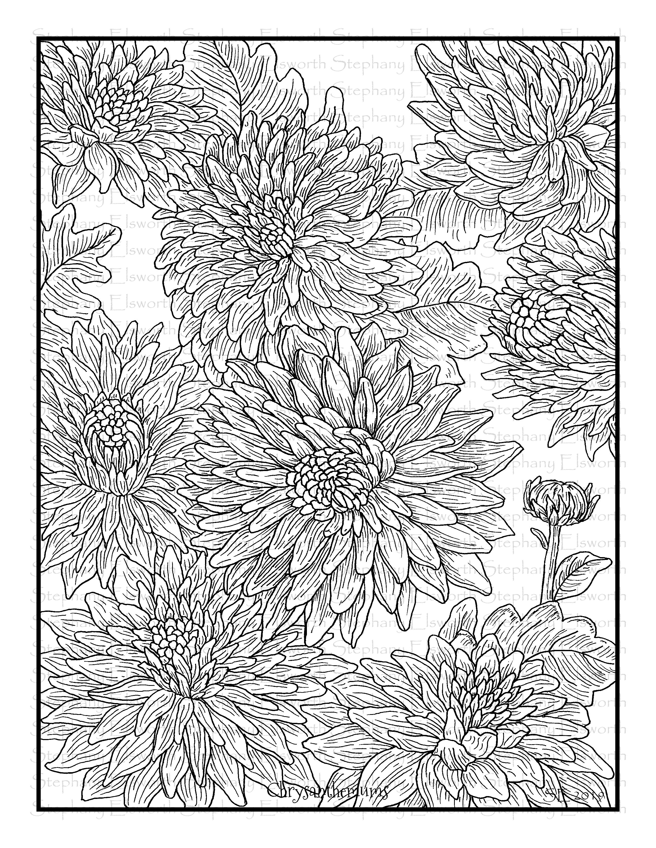 chrysanthemum coloring pages chrysanthemums printable coloring page color with steph coloring chrysanthemum pages