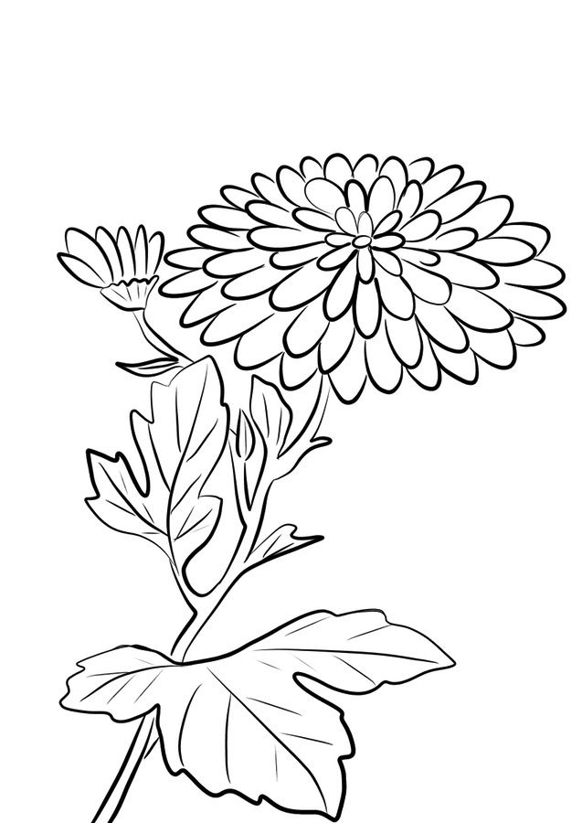 chrysanthemum coloring pages coloring pages coloring pages chrysanthemum printable chrysanthemum pages coloring