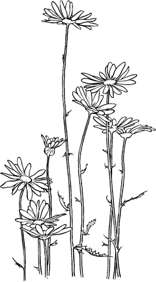 chrysanthemum coloring pages garden of chrysanthemum coloring page garden of pages coloring chrysanthemum