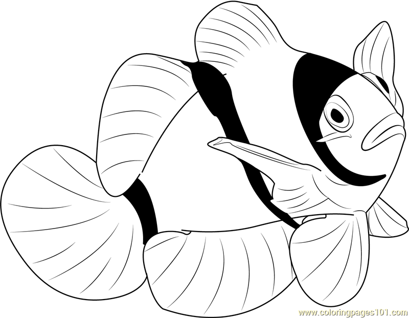 clown fish drawing clown fish clipart black and white free download on fish clown drawing