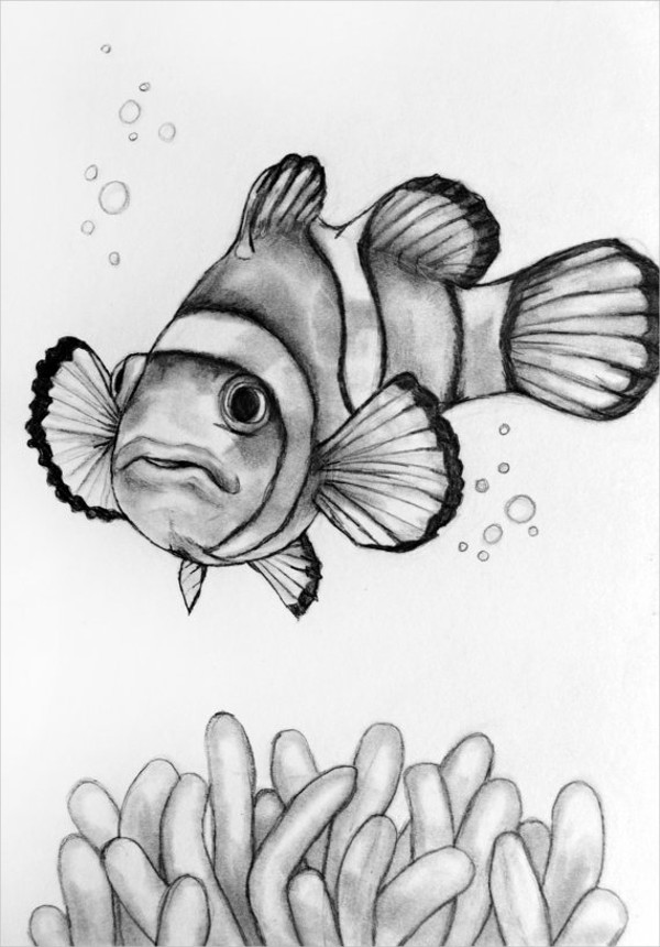 clown fish drawing how to draw a clown fish step by step drawing tutorials drawing fish clown