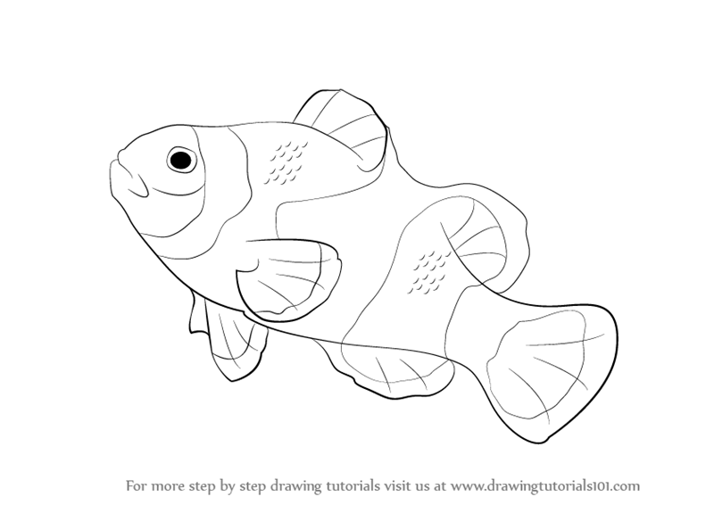 clown fish drawing learn how to draw a clownfish fishes step by step drawing fish clown