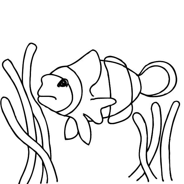 clownfish drawing clown fish drawing project by monart online store tpt drawing clownfish
