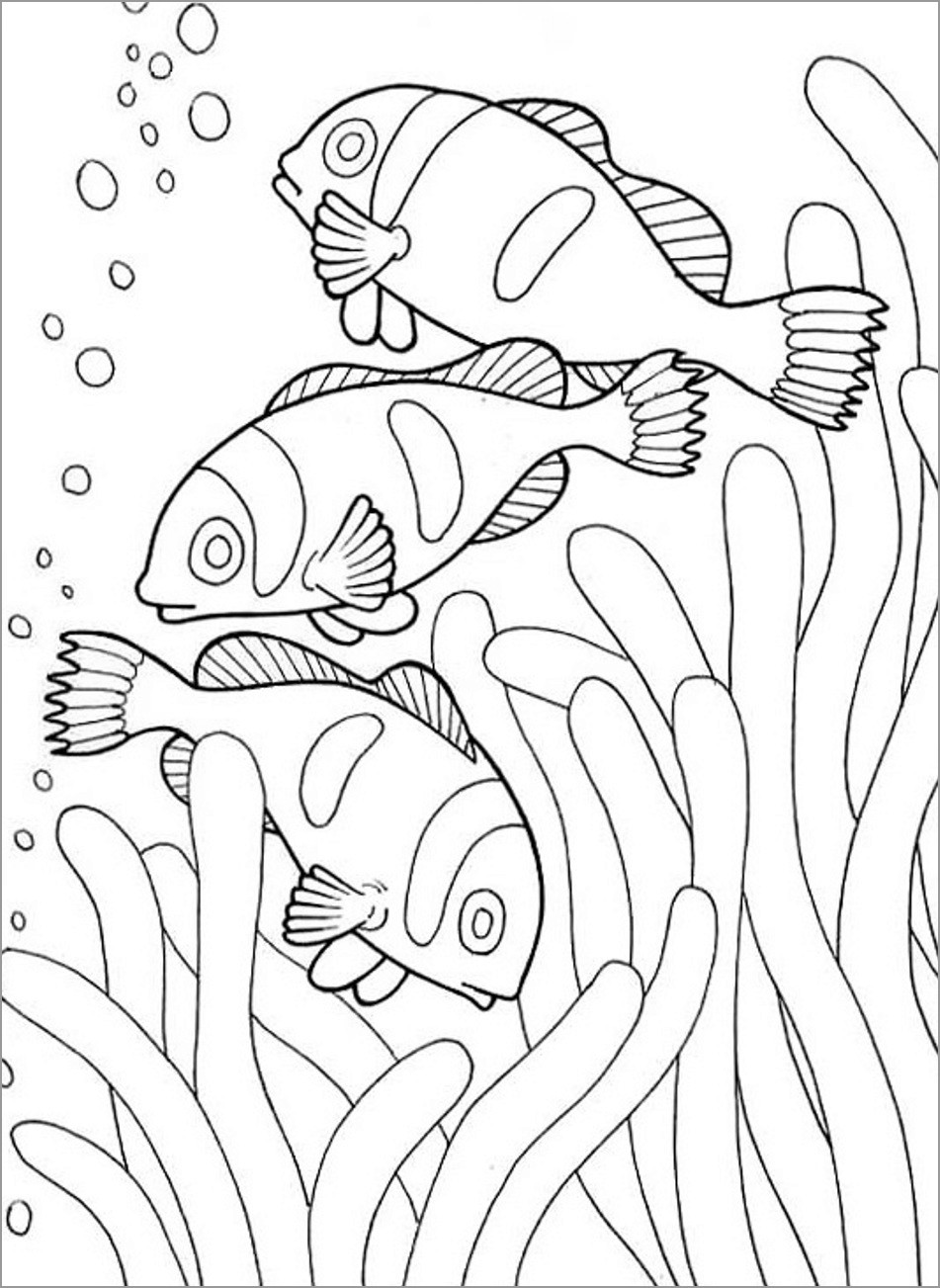 clownfish drawing clown fish with bubbles coloring pages best place to color clownfish drawing