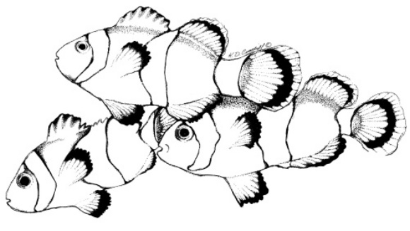 clownfish drawing fundraising success depends on analysis of net results clownfish drawing