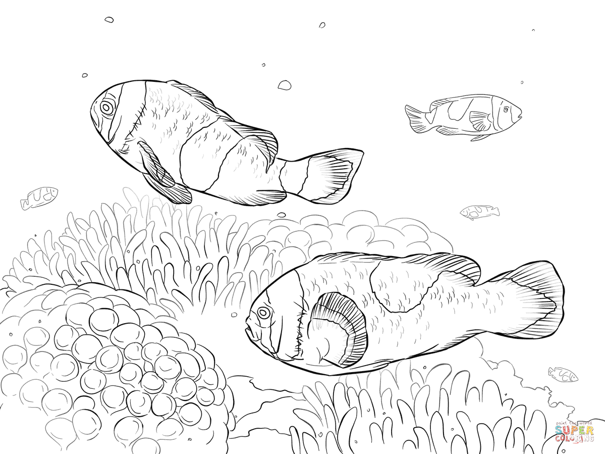 clownfish drawing how to draw a clown fish step by step drawing tutorials clownfish drawing