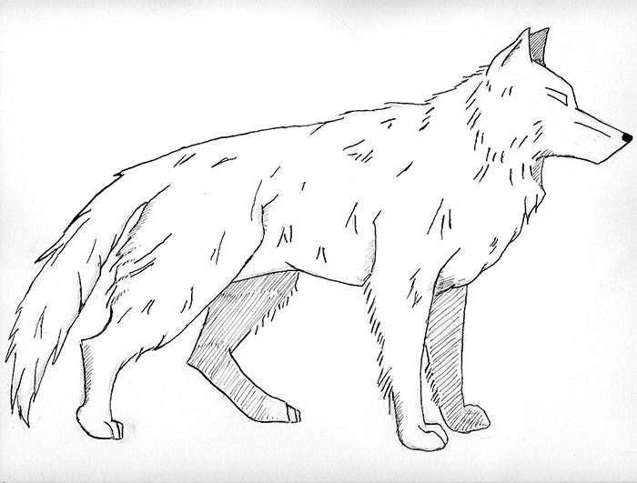 color in wolf detailed wolf coloring pages at getcoloringscom free in wolf color