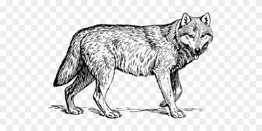 color in wolf wolf coloring sheets png free wolf coloring sheetspng wolf in color