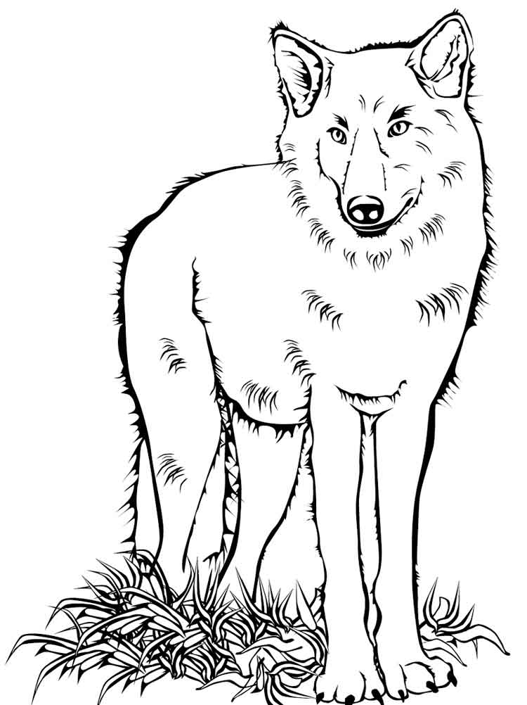 color in wolf wolves for coloring color in wolf