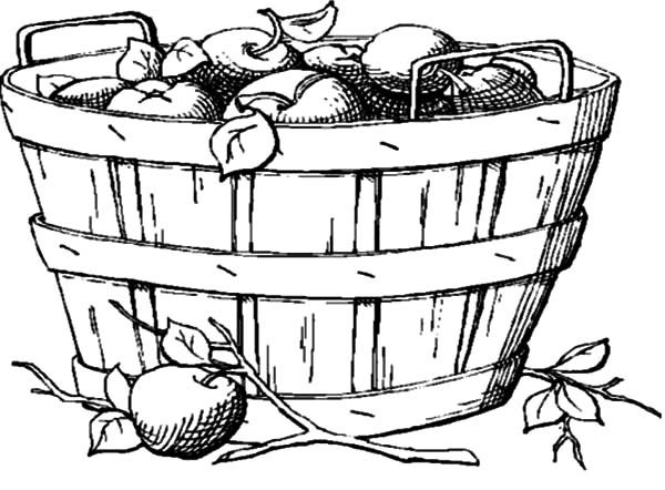 coloring apple basket apple basket coloring page sketch coloring page apple basket coloring