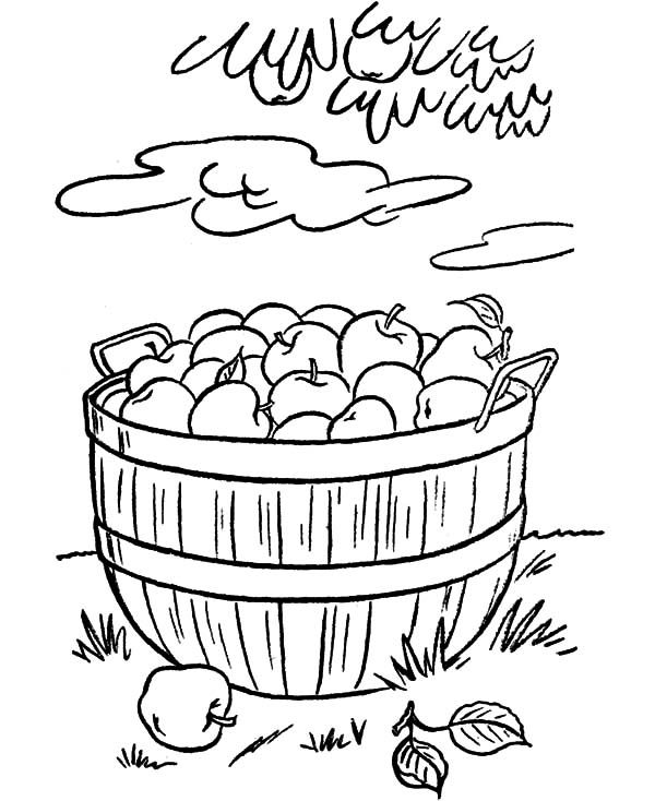 coloring apple basket apple basket coloring page sketch coloring page apple coloring basket