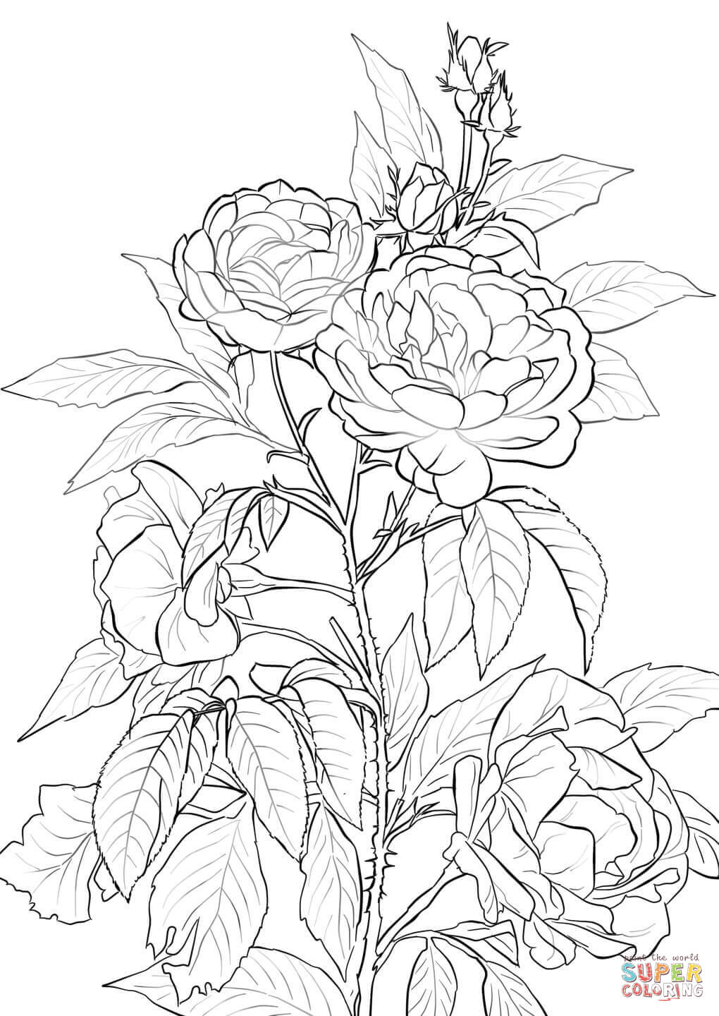 coloring book rose free printable roses coloring pages for kids coloring book rose 1 1
