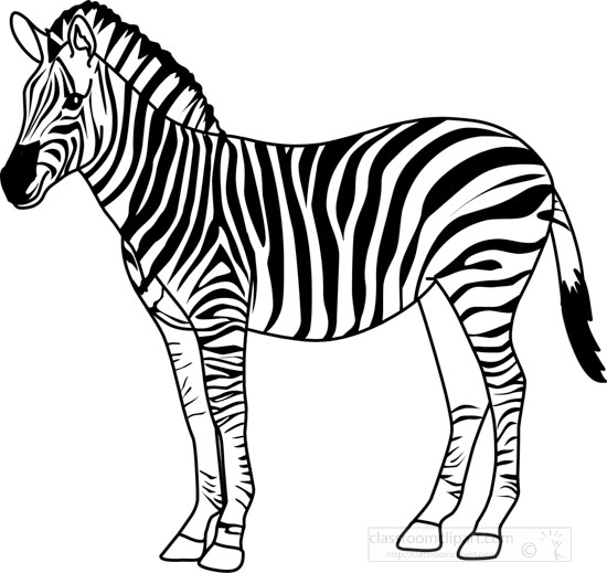 coloring clipart black and white zebra animals black and white outline clipart zebra3283 zebra white black clipart and coloring