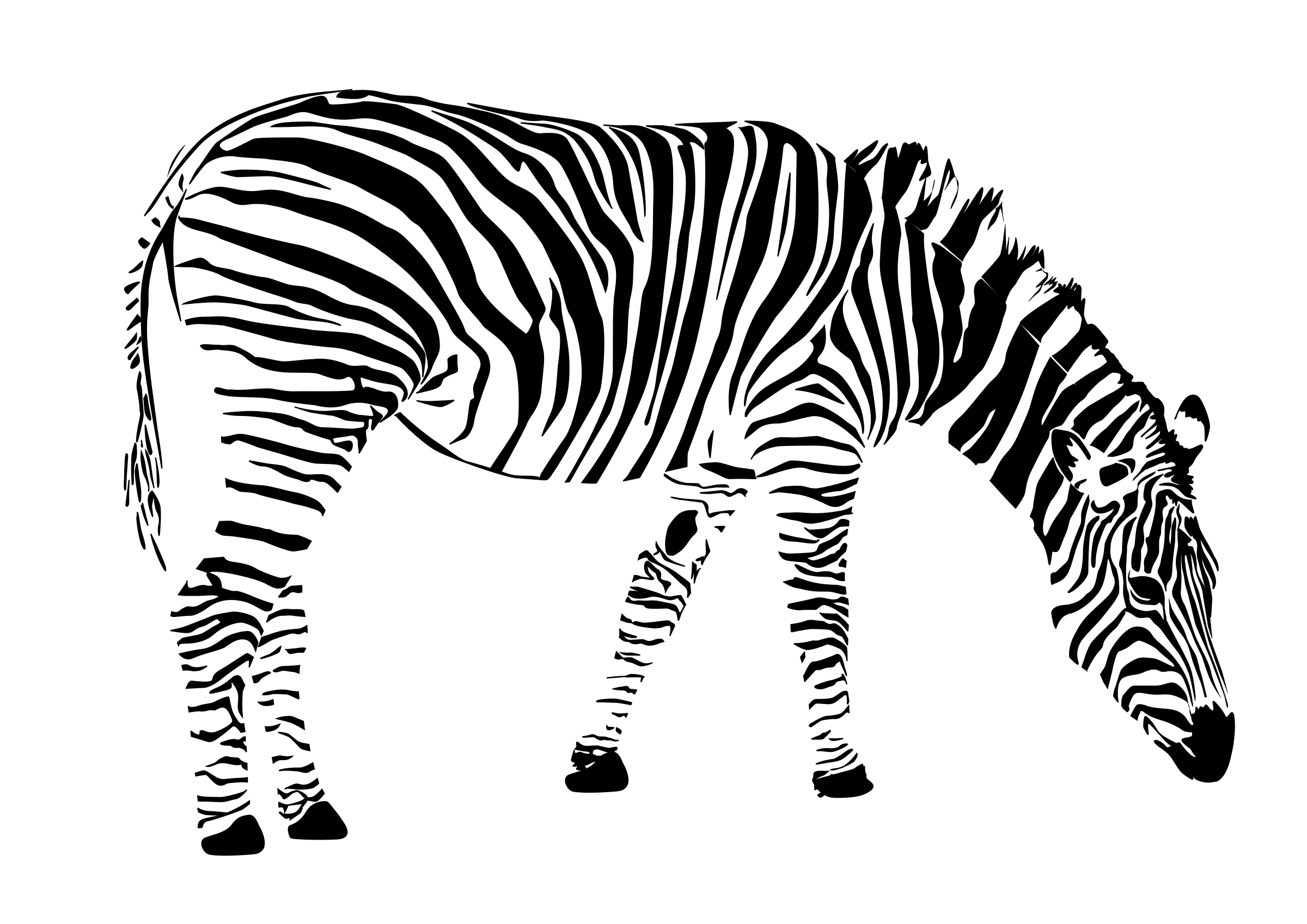 coloring clipart black and white zebra animals clipart zebra3282outline classroom clipart clipart coloring black and white zebra